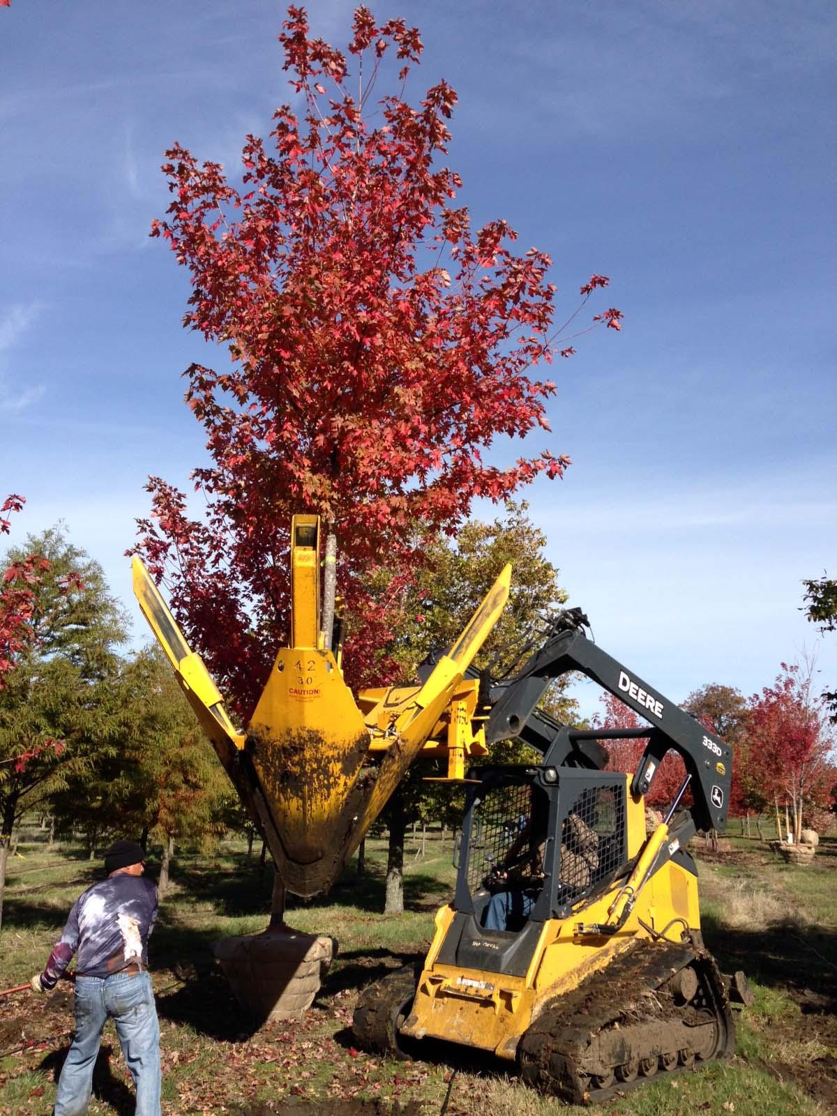 Landgraf Farms Digging Nursery Trees with Tree Spade